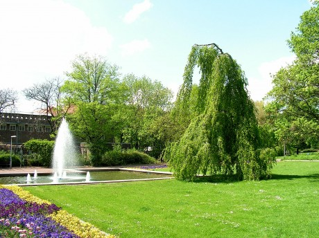 Bäume und Wasser