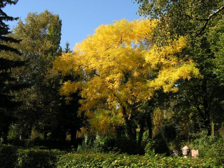 Gelbes Herbstlaub