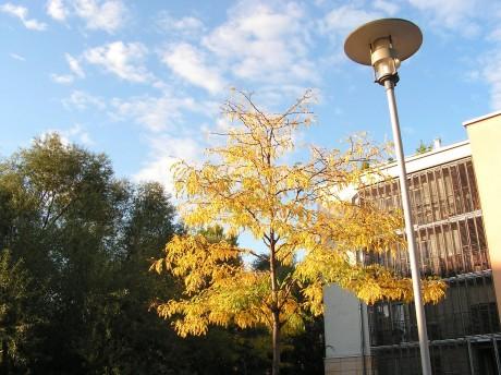[lang_de]Herbst am Salzgrafenplatz[/lang_de][lang_en]Autumn at the Salzgrafenplatz[/lang_en]