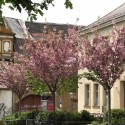 Kirschbäume vor der Konzerthalle