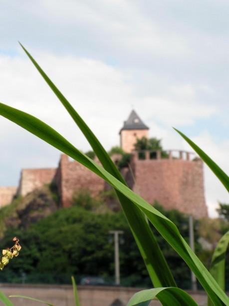 Schilf vor der Burg